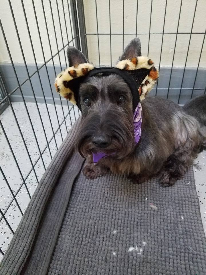 dog with cat ears