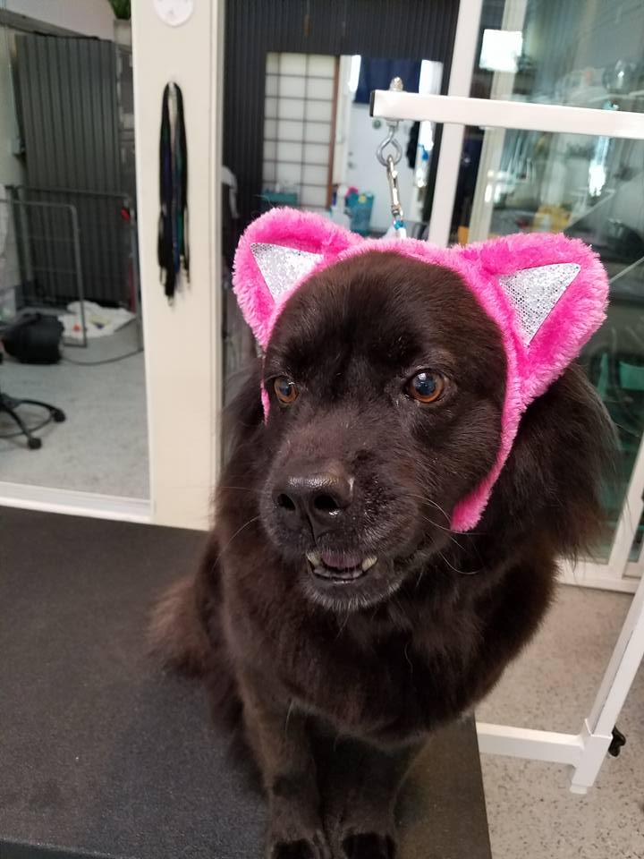 dog with cat ears 2