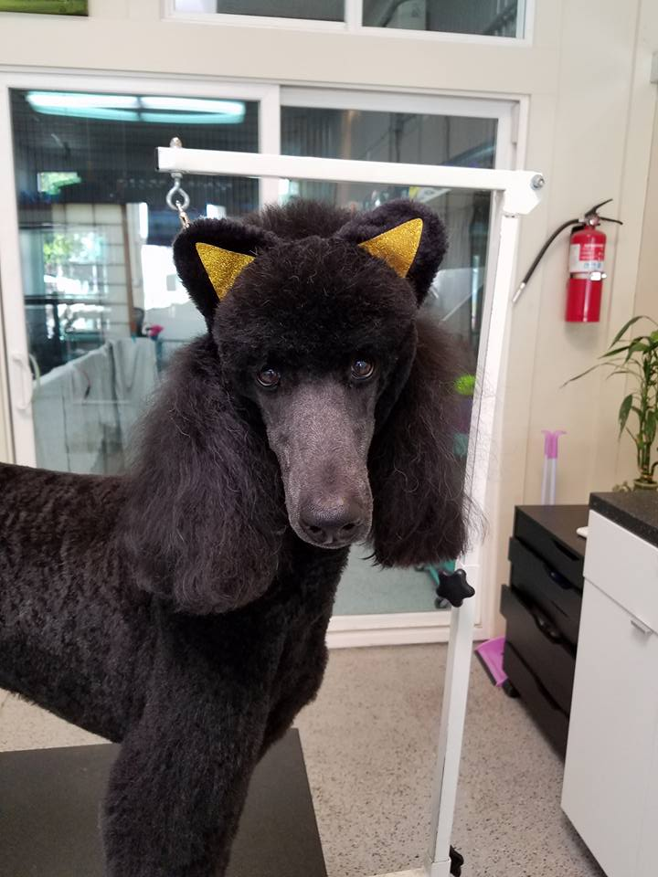 dog with cat ears 3