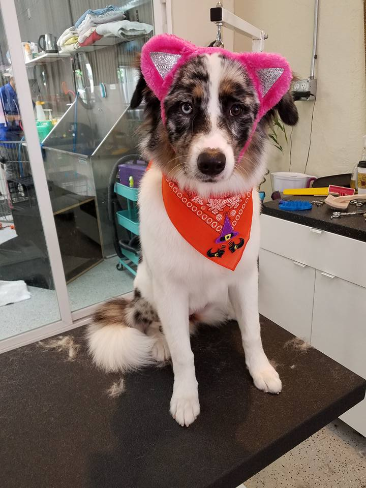 dog with cat ears 4
