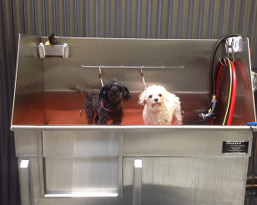 white dog and black dog in tub