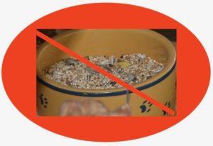 No seeds
