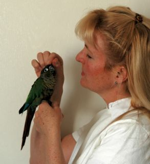 Leslie and Elvis, Green-cheeked Conure.
