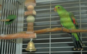 feed parrots spinach