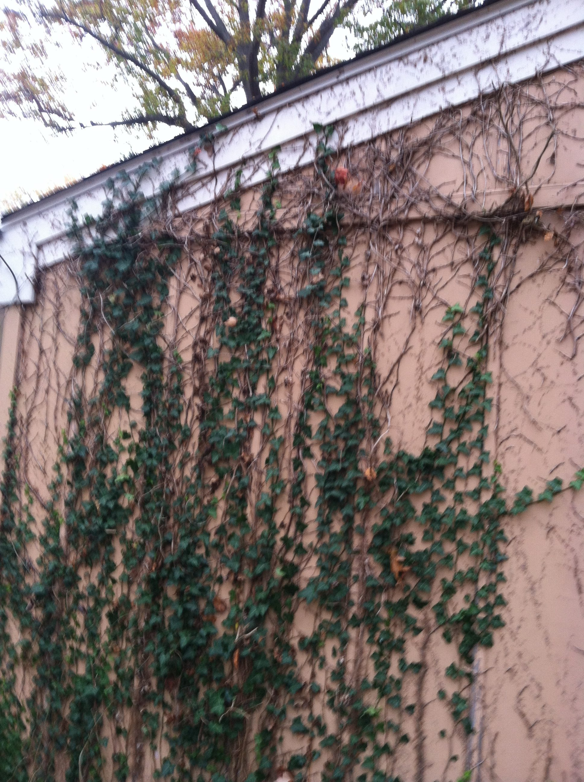 N. Olmsted Ivy Removal & Exterior Paint