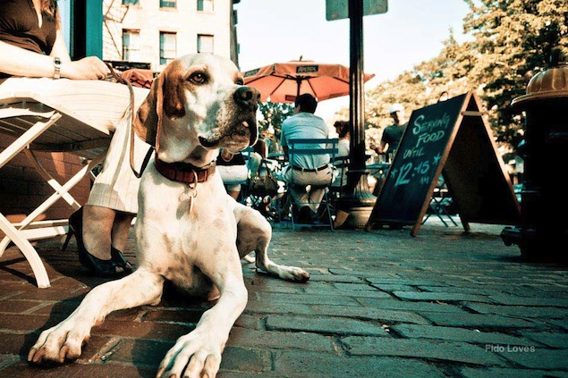 Top Dog-Friendly Places in San Diego
