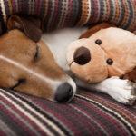 I'm Dog Tired, So Fucking Dog Tired - BluntMoms.com