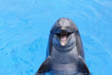 Dolphins Make Terrible Doulas - BluntMoms.com
