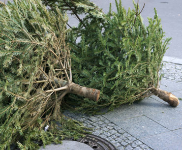 An Open Letter To My Neighbor Waiting For His Christmas Tree To Be Picked Up