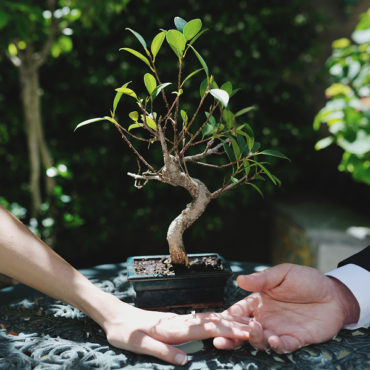 A Bonsai for Valentine's Day.