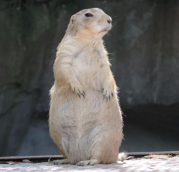 Groundhog Day on Thanksgiving