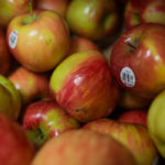 A bunch of apples - nutritional approach
