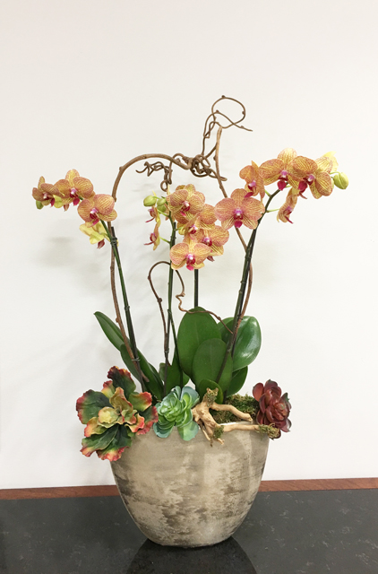 Website Blooming Orchid Arrangement Medium E Copy