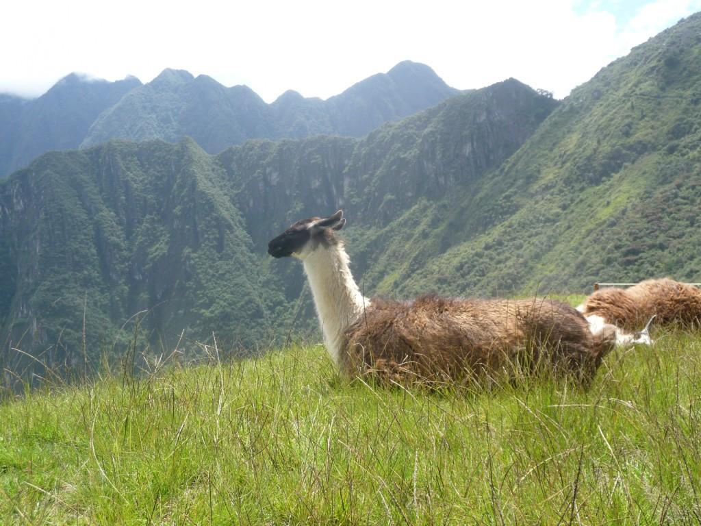 Spanish school Cusco