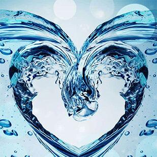 heart-water