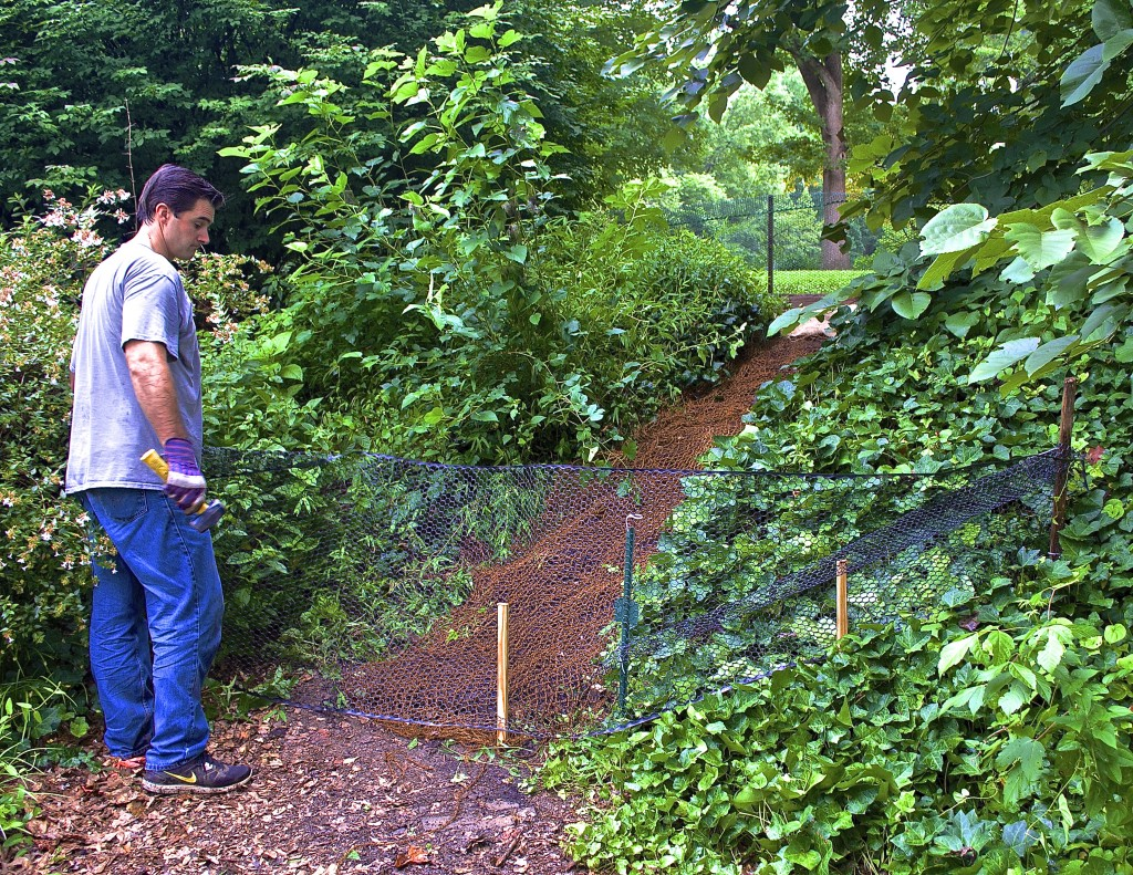 What was once a goat path is now an erosion control zone!