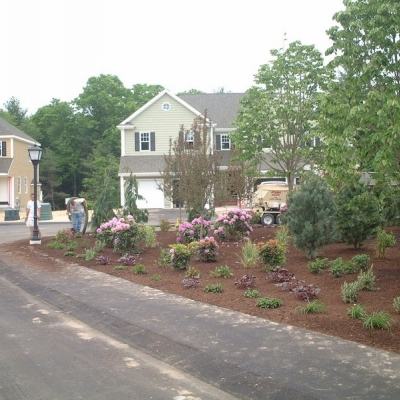 Residential Development Planting