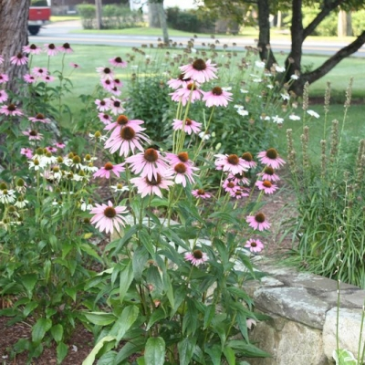 plants-flowers-002