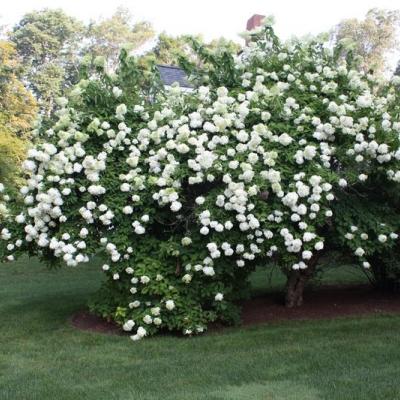 plants-flowers-007