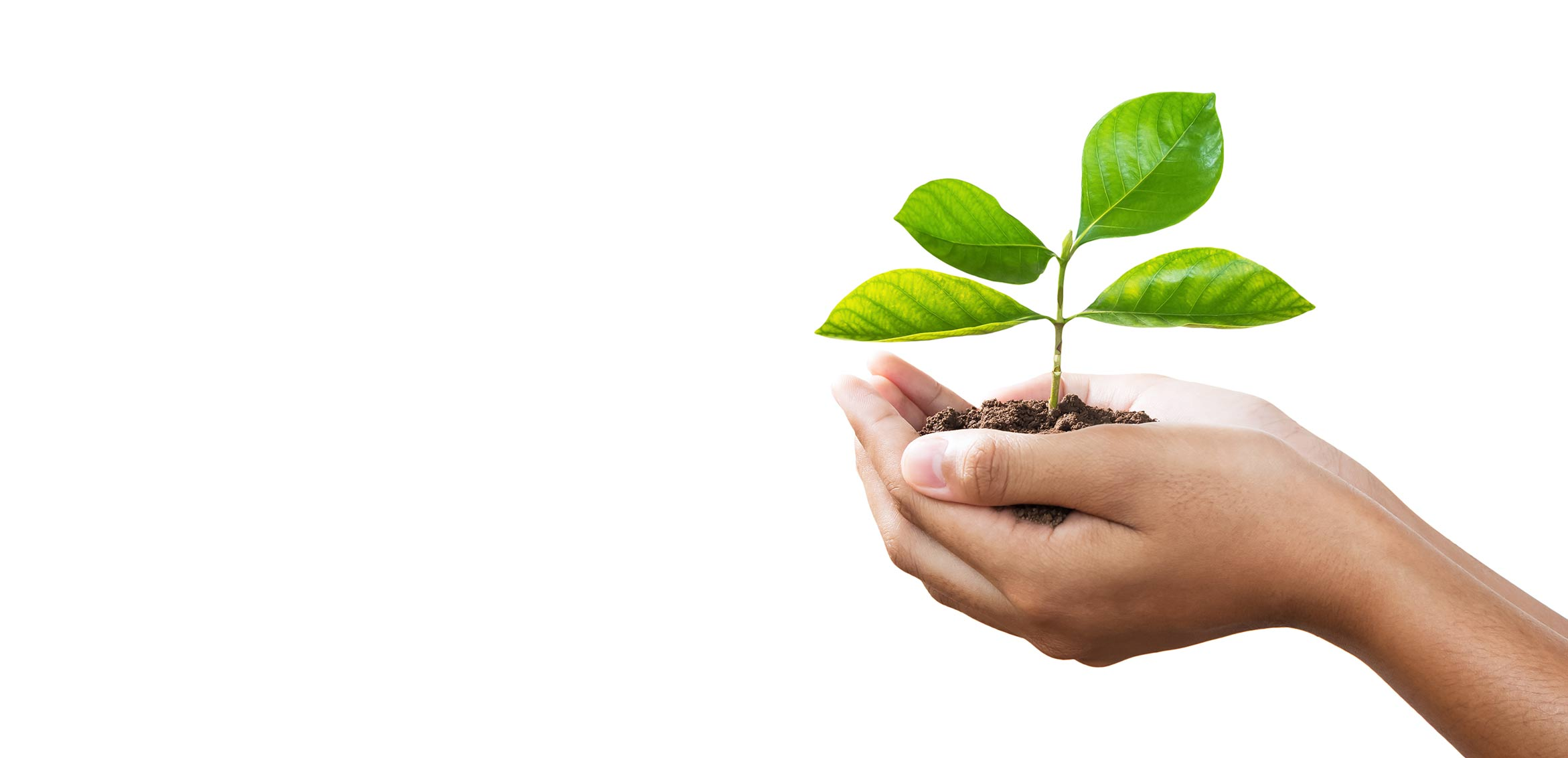 Photo of person holding growing plant