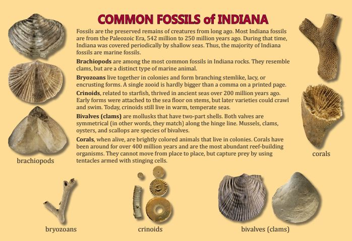 Fossil Hunting at Twin H Tree Farms