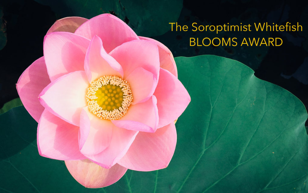 blooming pink flower on green leaf background