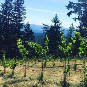 Terragena Estate Vineyard