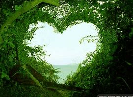 heart shaped from green shrubs and trees
