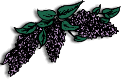 syren_general_store_lilac