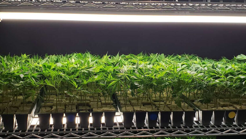 2020 Best Clones Available Here