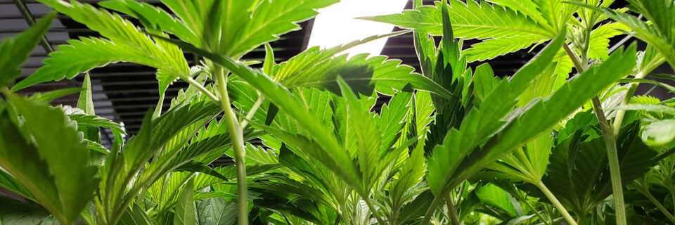 We offer the best clones and service all of Southern California