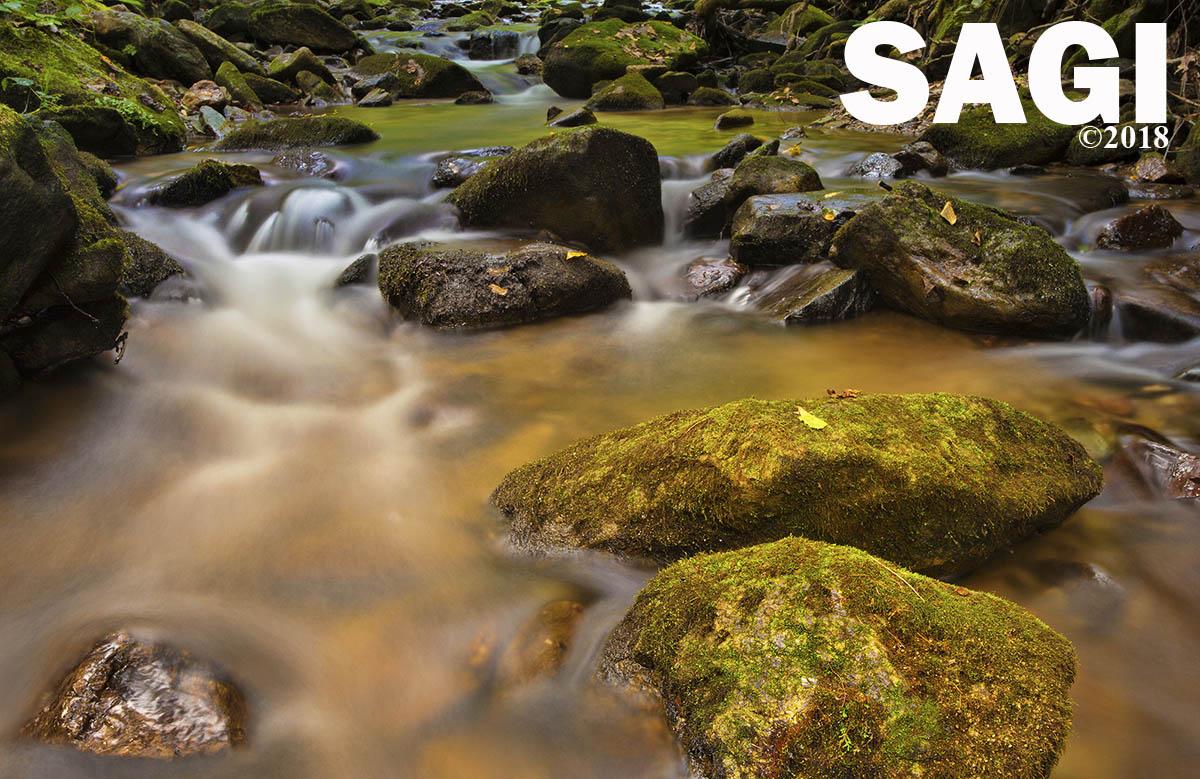 Pisgah National Forest Stream, Guy Sagi, The Year Santa Came Back, chidren in the outdoors, Raeford North Carolina