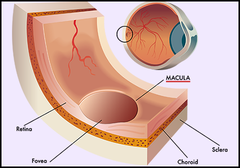 Eye Diagram of Macula