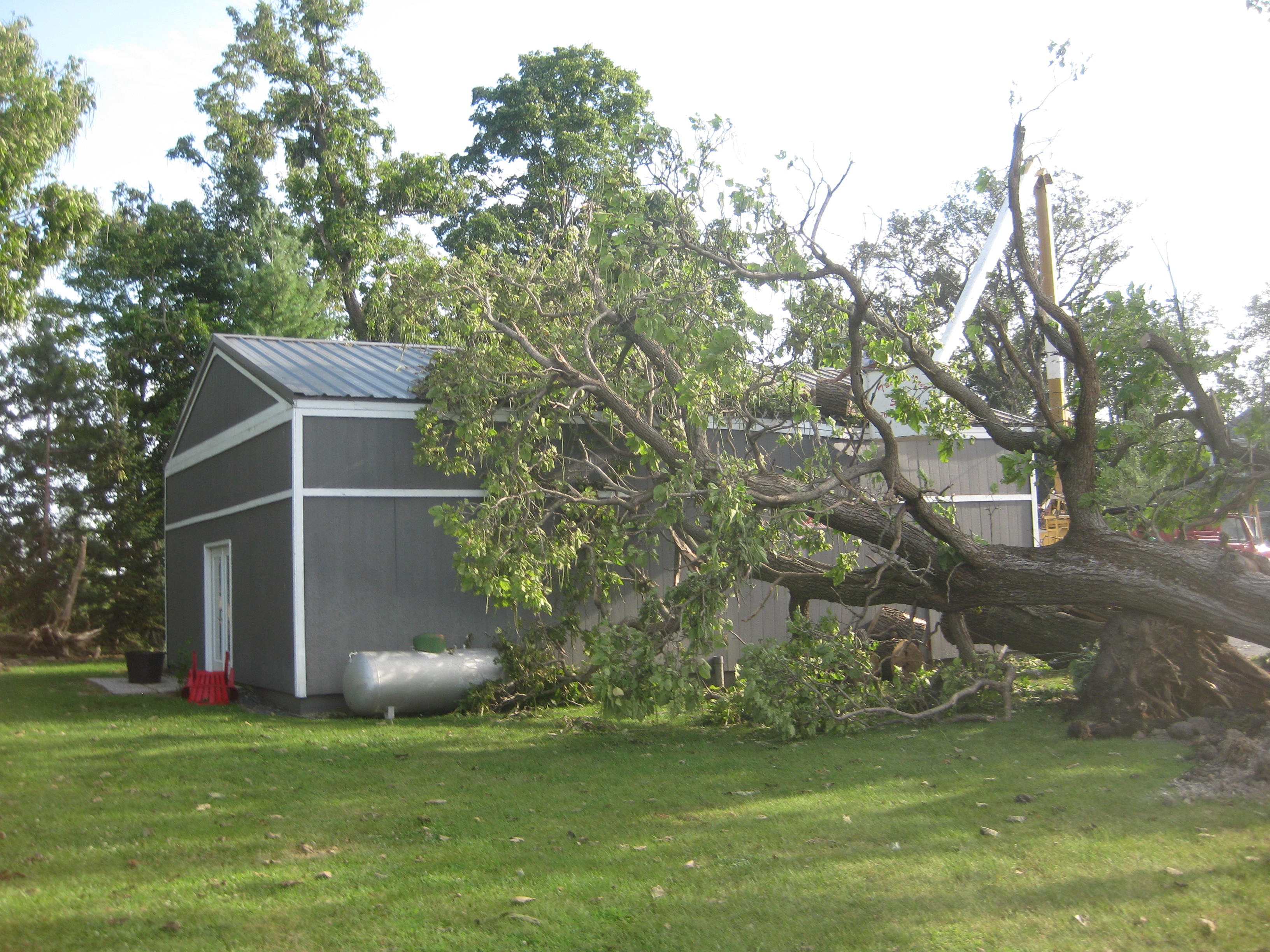 Tree Damage Indiana