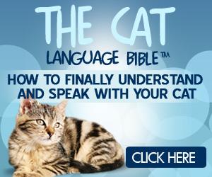 Cat Language Bible Review – catlanguagebible.com a Scam?