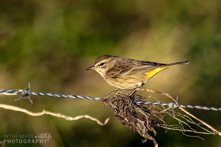 Little Bird On A Wire
