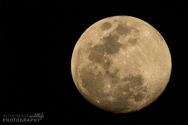 In the Image Wildlife Photography Moon