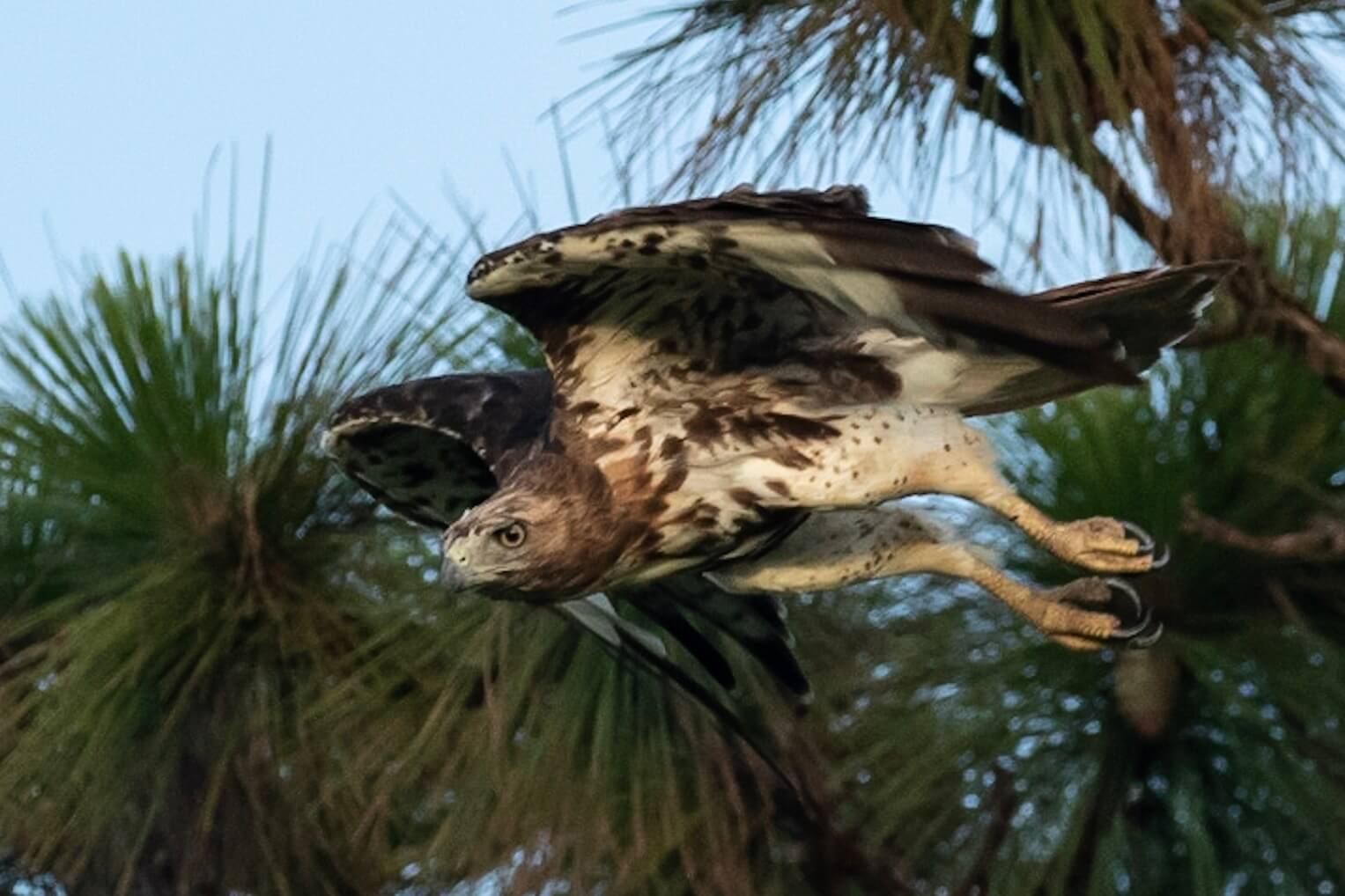 In the Image Wildlife Photography Juvenile Neighboring Eagle