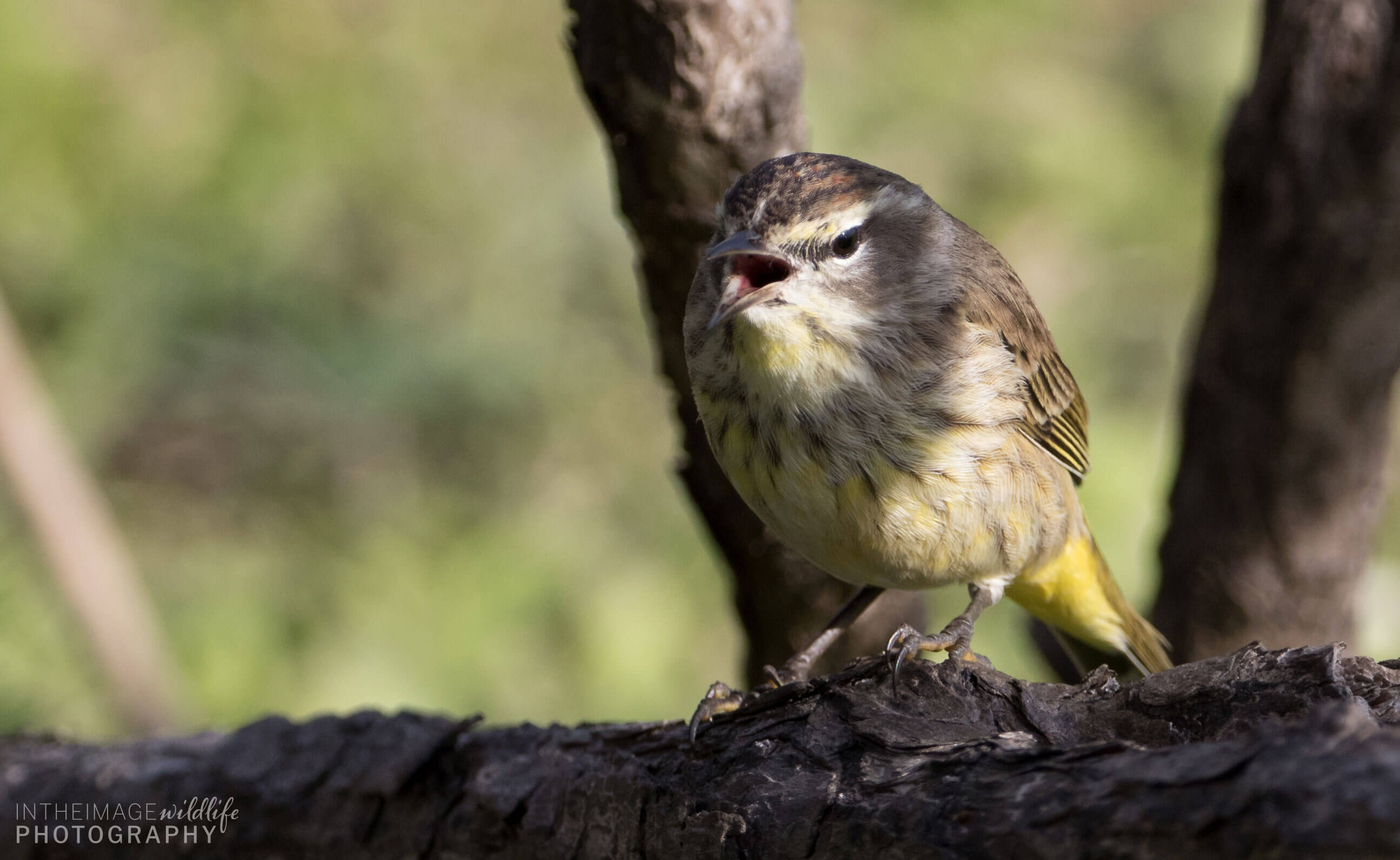 In the Image Wildlife Photography Little Bird Singing