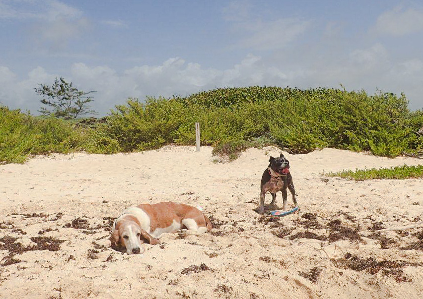 Bringing our Pets into Mexico