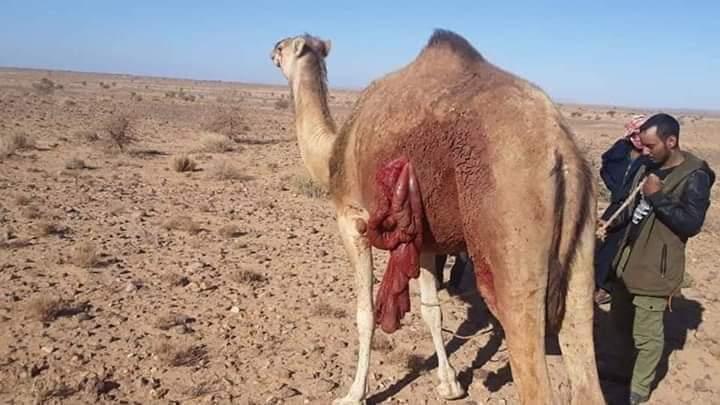 El ejército marroquí continúa abriendo fuego contra los nómadas