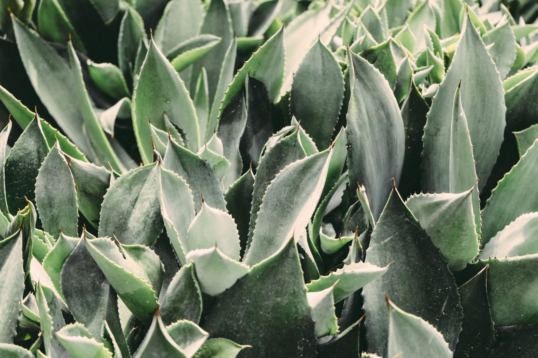 gardenly-105741