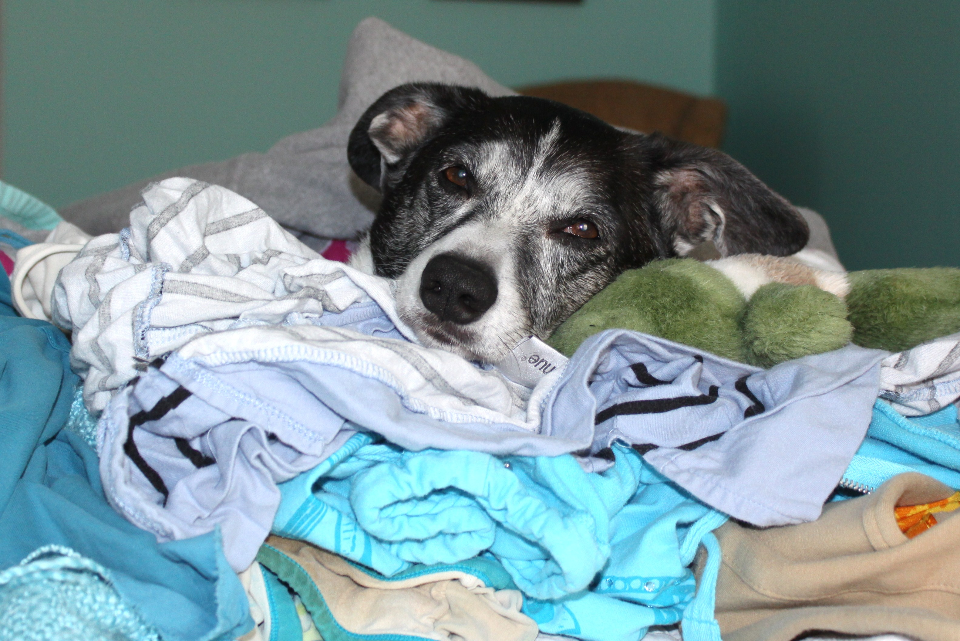 Lighten the {Laundry} Load