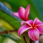 Flower - CR 2016