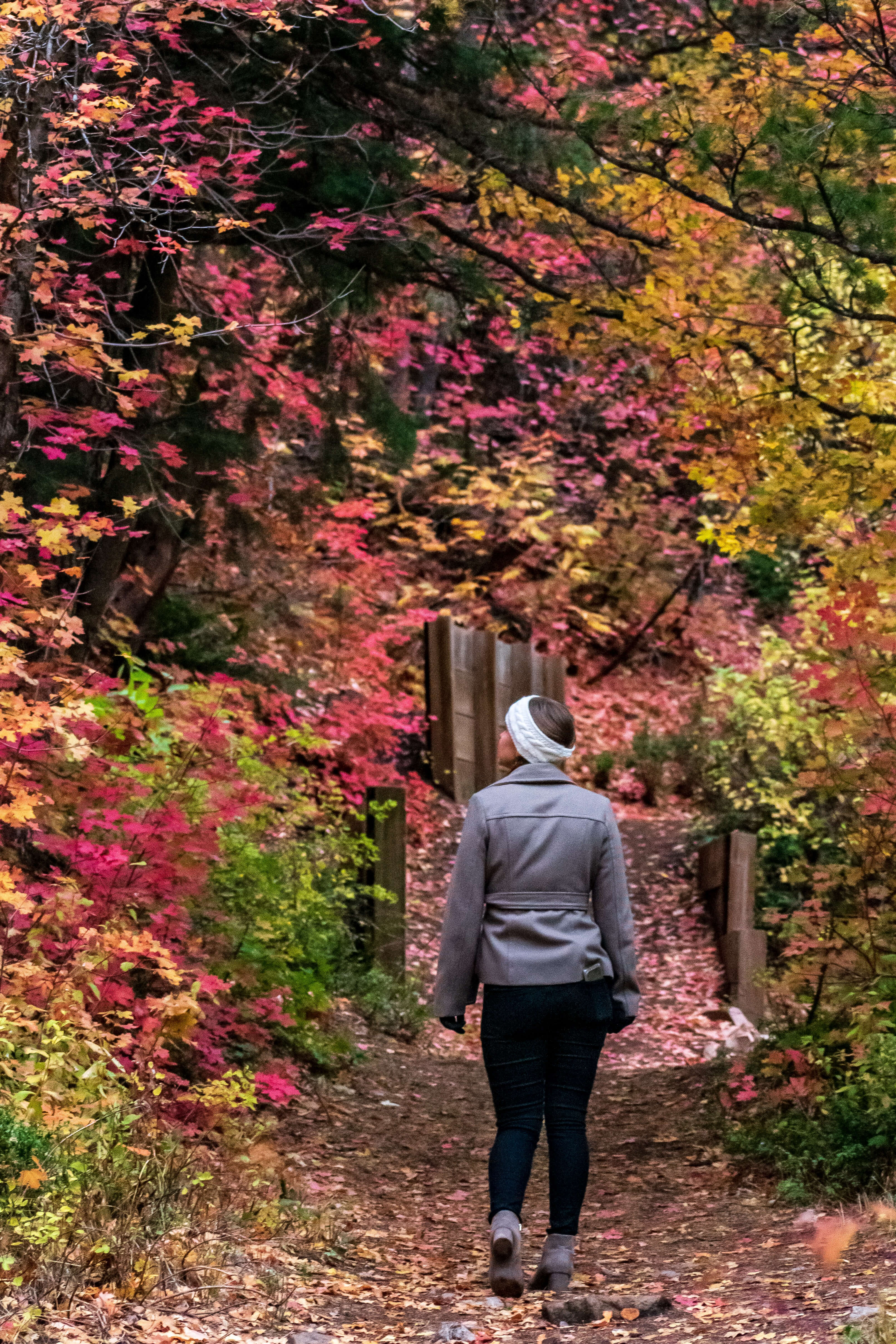 Woman walking through fall colored trees