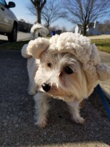 dog, cute, teddy bear, sweater