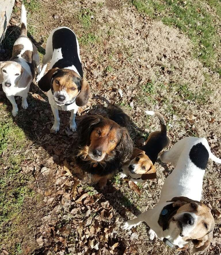 five dogs, hounds, hound dogs