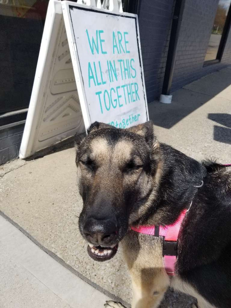 german shepherd smile sign we are all in this together