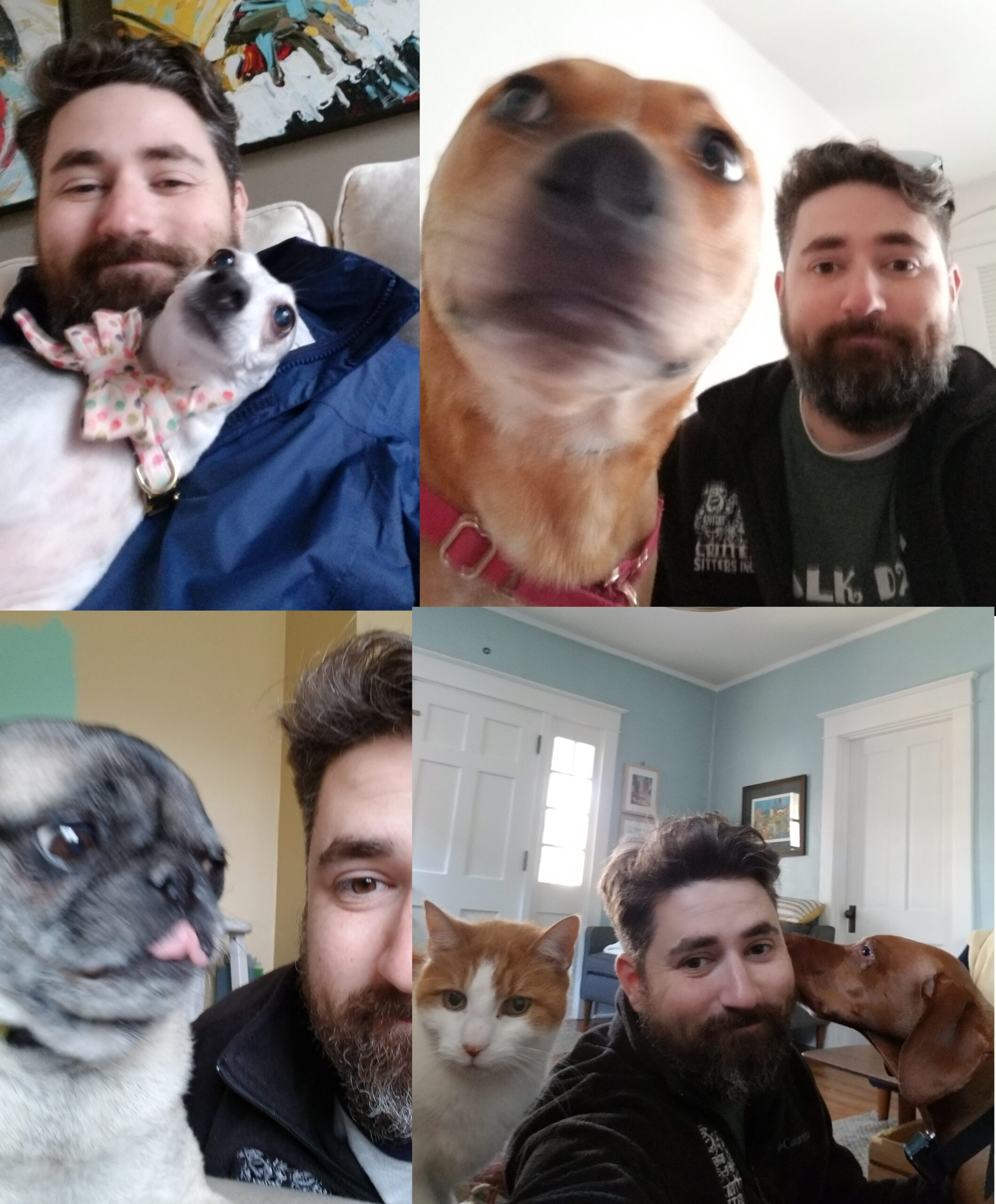 collage four dogs one cat human