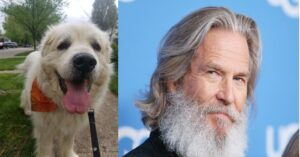 dog celebrity lookalike jeff bridges